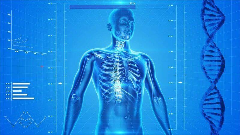 human body system cbd